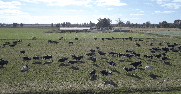 Minogue Dairy Farm